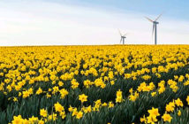 The beautiful corner of Britain. A host of golden daffodils Image Credit: Getty Images, 2020.