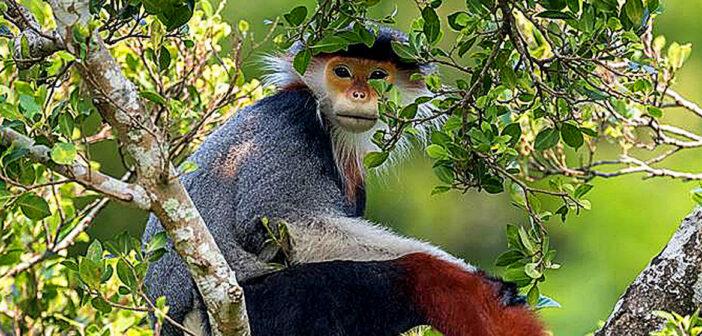 Wildlife Photographer of the Year.
