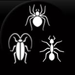 Spider, Cockroach, Ants