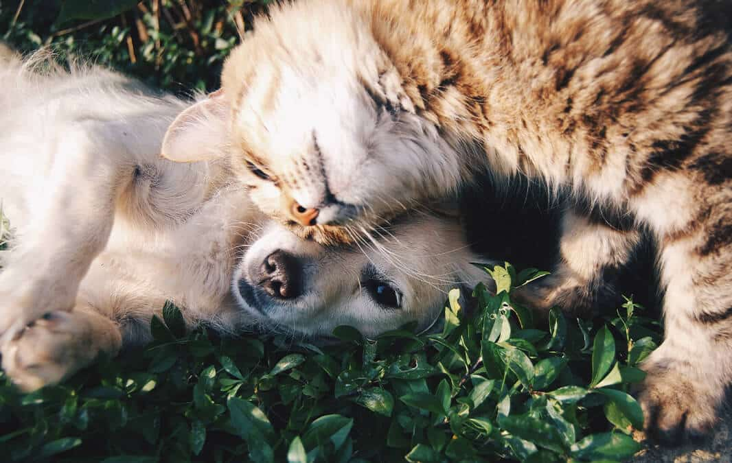 Dog and Cat cuddling on the grass
