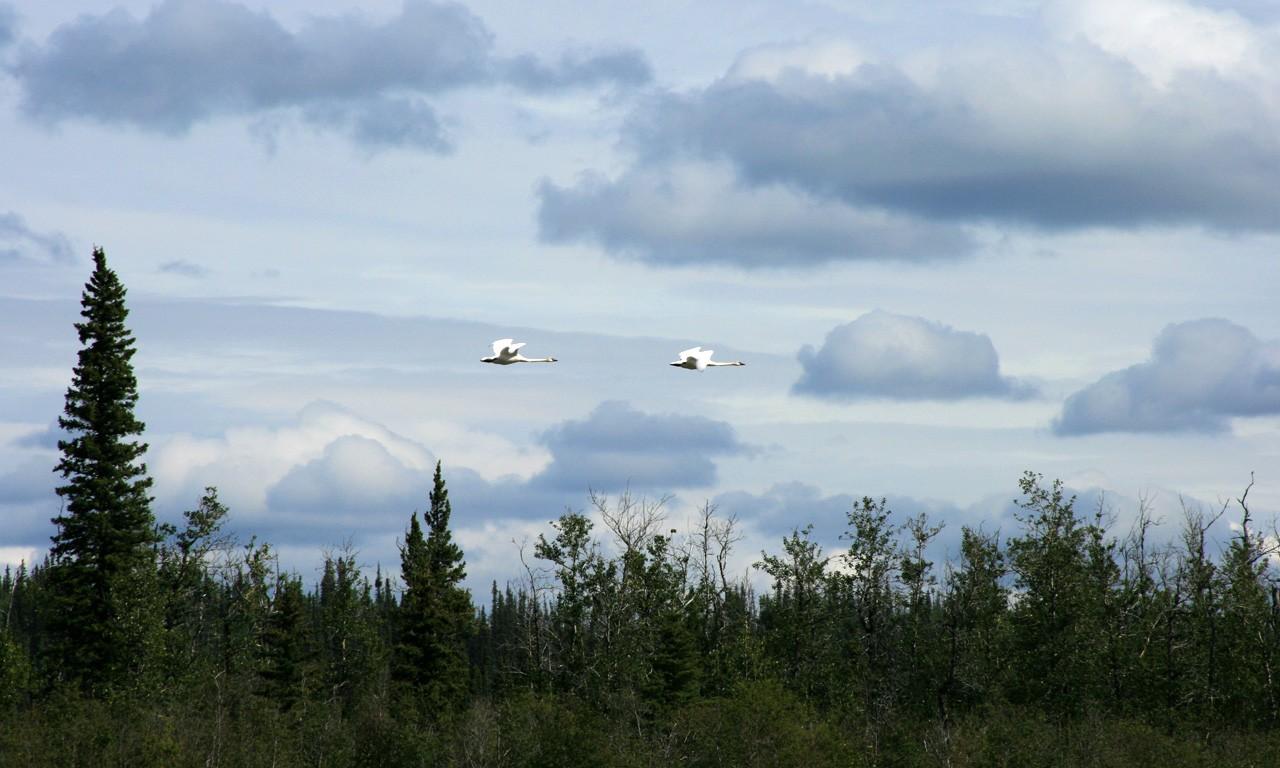 Alaska, Copper River, rafting, scenic floats, Alaska scenery, sightseeing