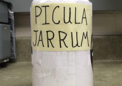 IVH Pharmacy Pickle Jar