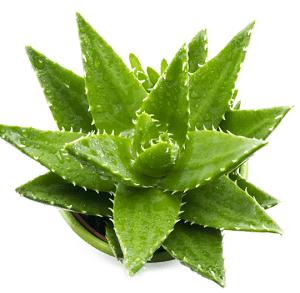 aloe-vera-natural-remedy
