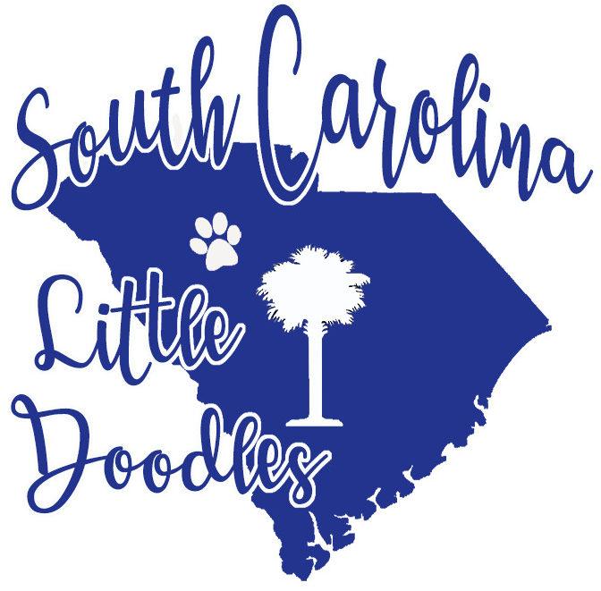 South Carolina Little Doodles
