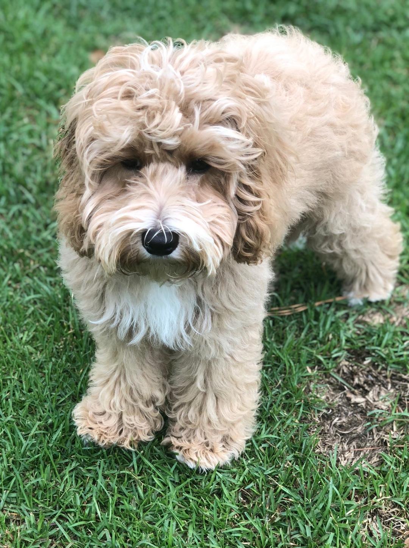 Rosie 4 months
