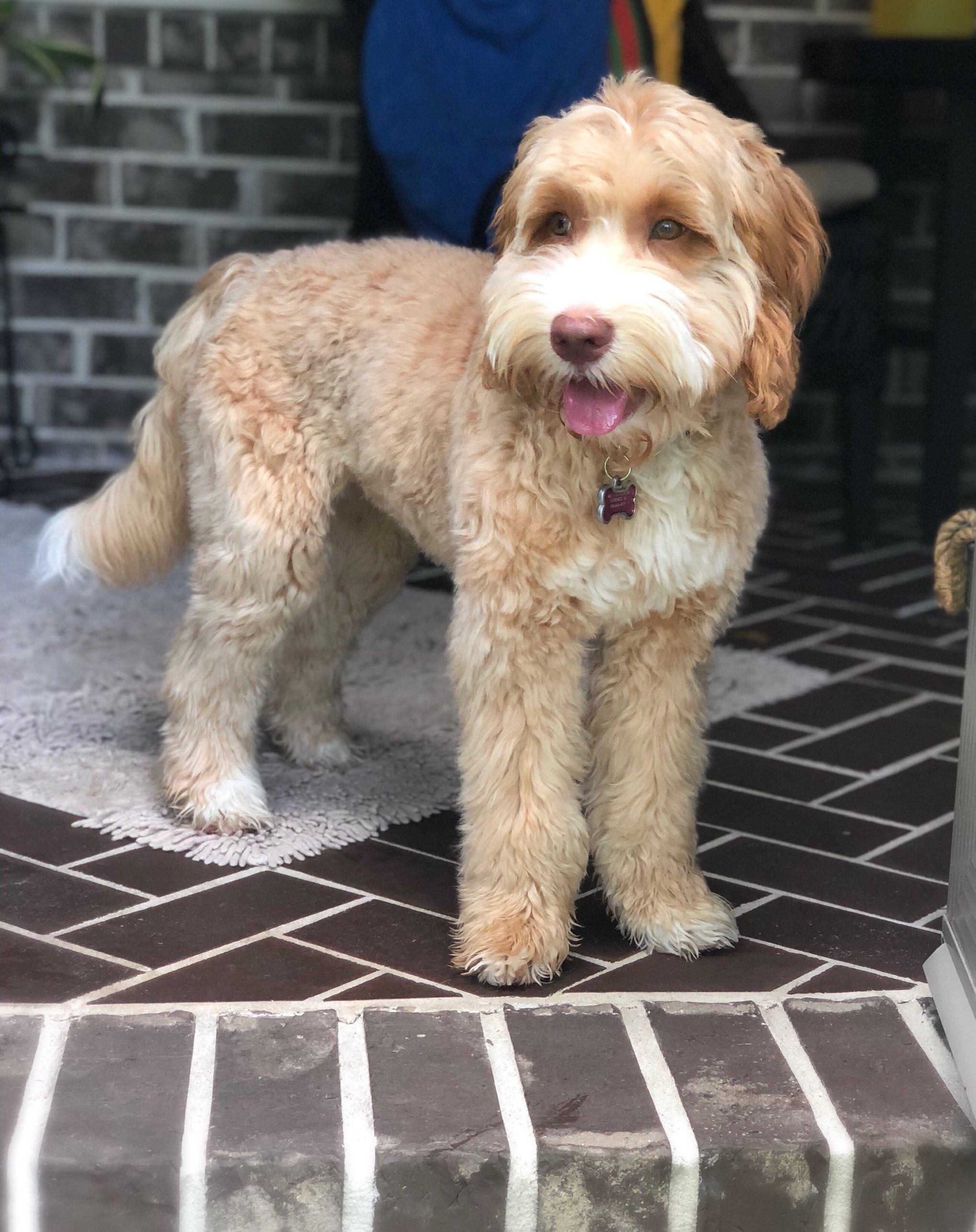 Maisie 6 Months