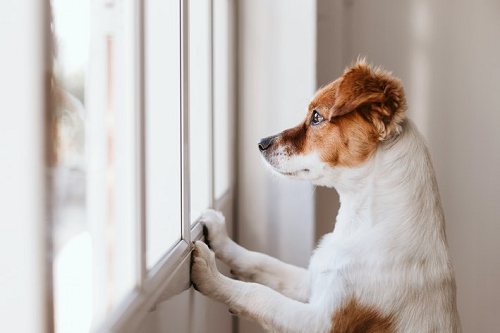 Are Dogs Self-Aware? New Study Reveals What Canines Think
