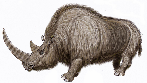 Warming Climate Probably Doomed Woolly Rhinos