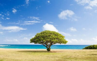 Two Ways Arbor Day Will Make Your Life Better