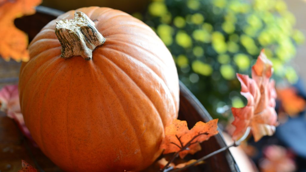 Fun Family Activities for Fall Weekends