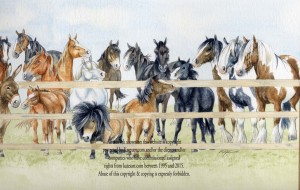 banner for Bransby Horse Sanctuary