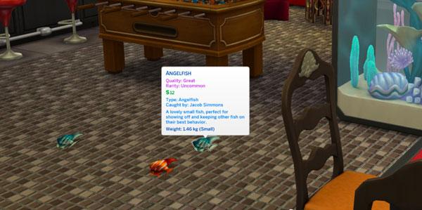 Debug vs. Caught Angelfish