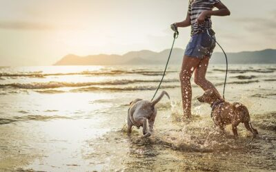 Nearby Dog Beaches Your Pup Will Love This Summer