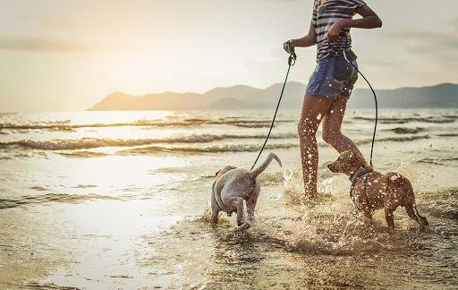 Dog at the beach enjoying sunset