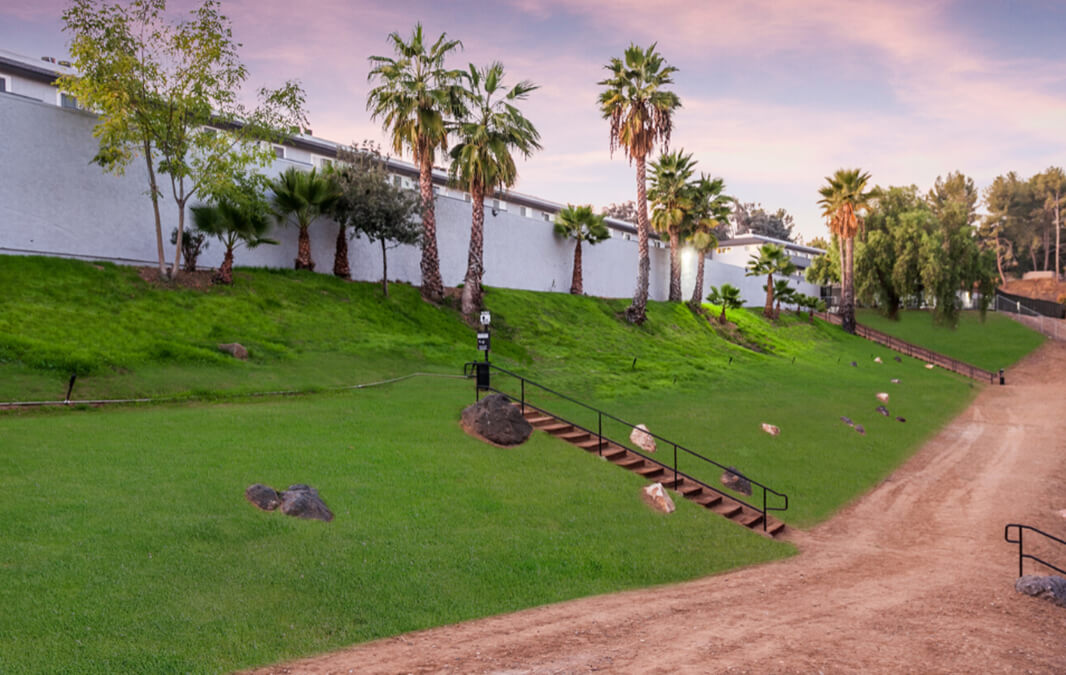 Beach pathway with grass and palm trees