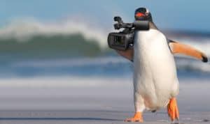 E-Vite-Penguin-final
