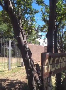 Mendoza tierra de museos - Algarrobo Histórico