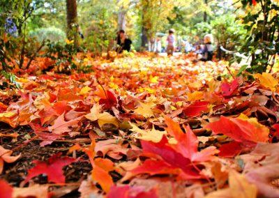 Fall Yard and Leaf Cleanup St. Catharines