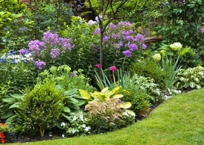 Annual and perennial plant mixture