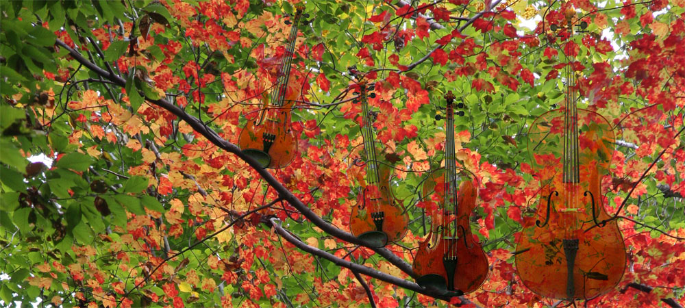 Quartet in the leaves