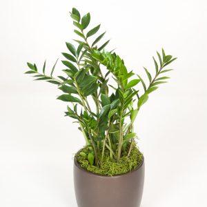 Floor plants 2-4'