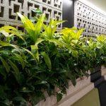 Plants Make Workers Happier