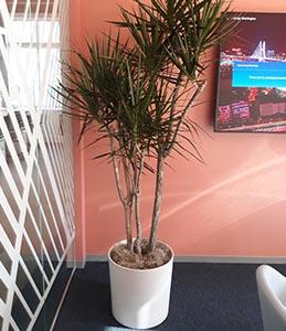 indoor plant care san francisco