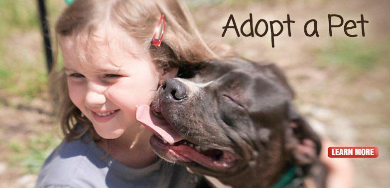 home_banner_adopt_pet