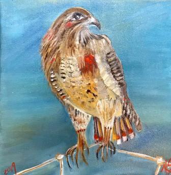 Hawk Kelly Scudieri