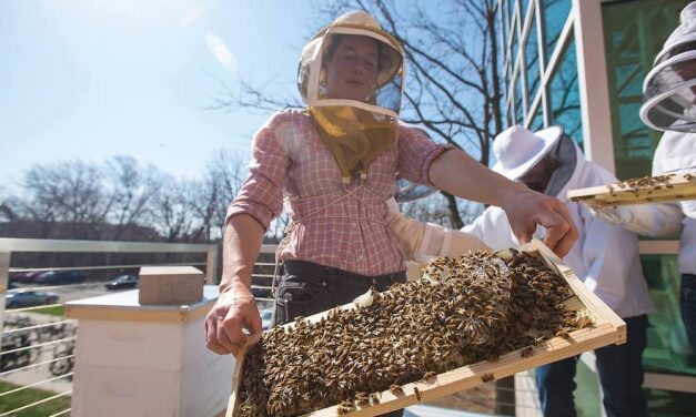 Honey Farms and Agritourism Stops on the Great River Road