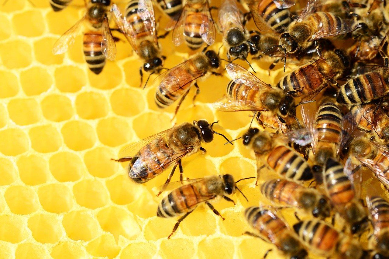 Leedle Houme Bees (Mulkeytown, IL)