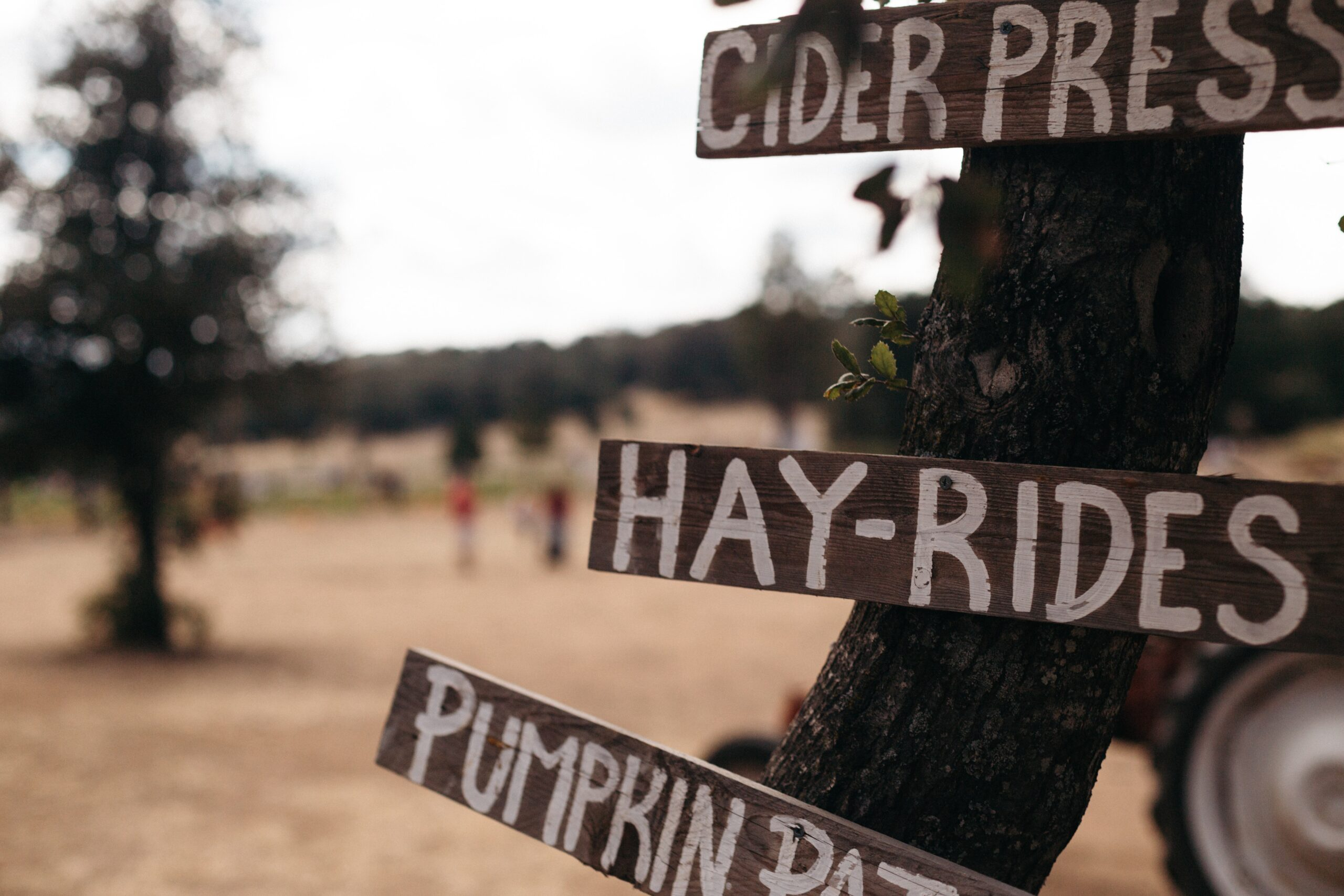 4 Reasons To Visit The Cajun Country Corn Maze In The Fall