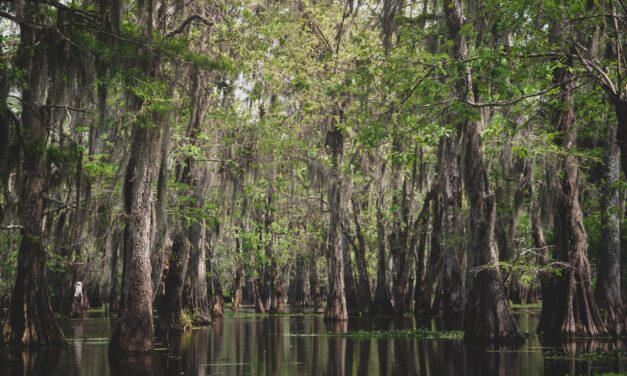 Swamp Tours in Louisiana's Honey Island Swamp!