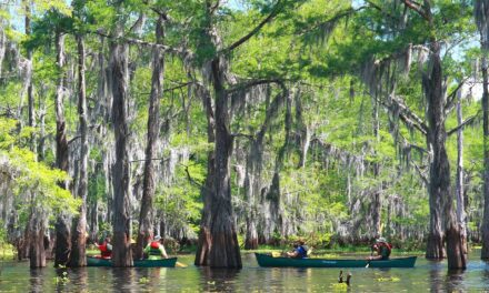 Exciting Louisiana Swamp Tours Along The Atchafalaya River Valley!