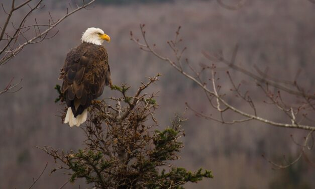 A Wisconsin Eagle Tour!