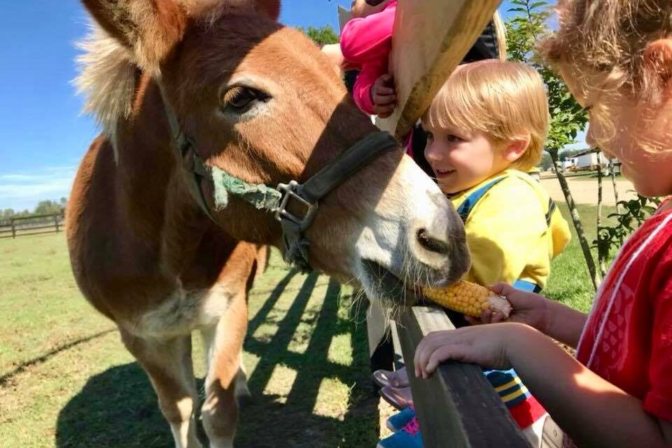 Fall Farm Visits on the Great River Road
