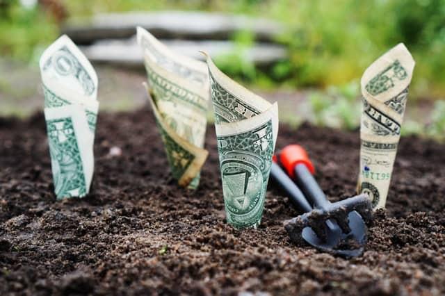 Cash growing in garden.