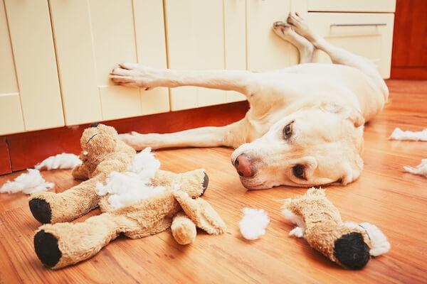 dog destroying toy