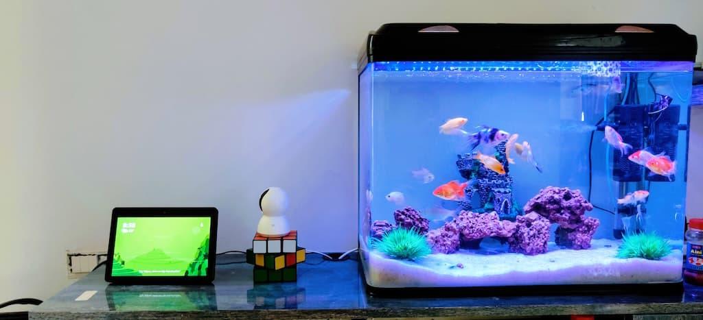 fish tank on desk