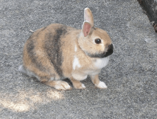 bunny-rabbit