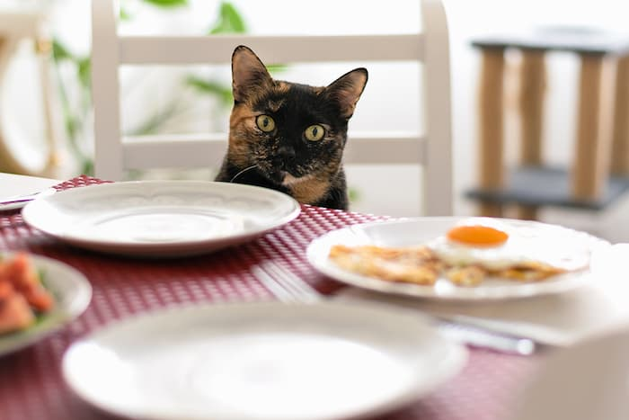 cat at table