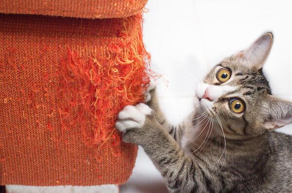 Kitten scratching furniture
