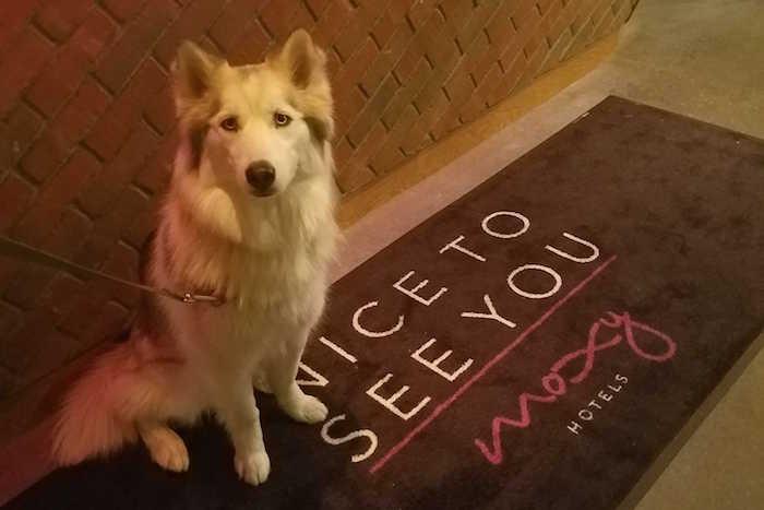 dog at hotel front desk