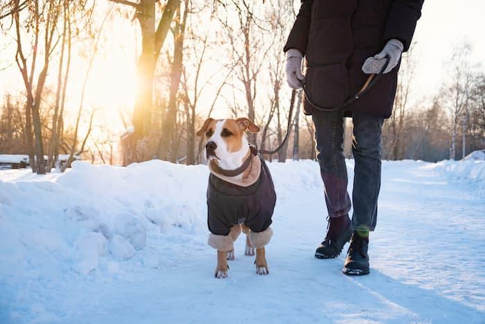 dog in a warm winter jacket