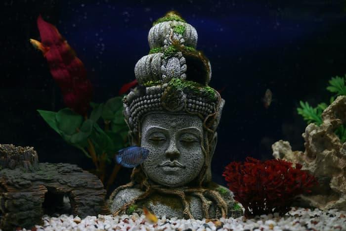 fish tank with decoration