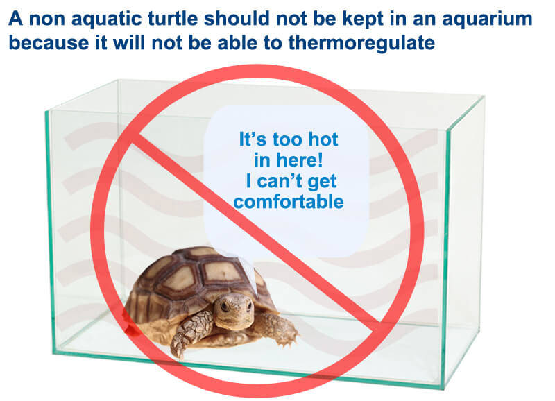 Aquariums are not suitable for non aquatic turtles