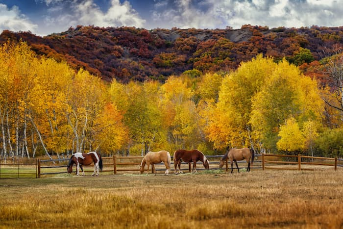 horses in a field with trees and mountain in background