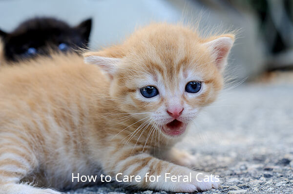 How to Care for Feral Cats