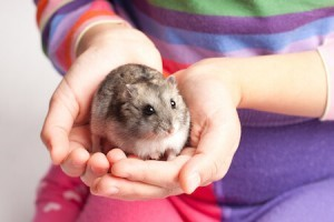 How to Hold a Hamster