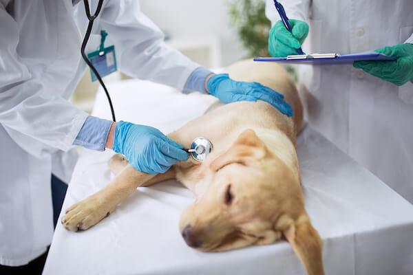 hurt puppy